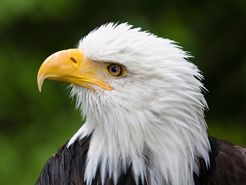 Sitka Raptor Center Walking Trip Booking