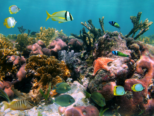 Cozumel sky reef Shore Excursion Prices