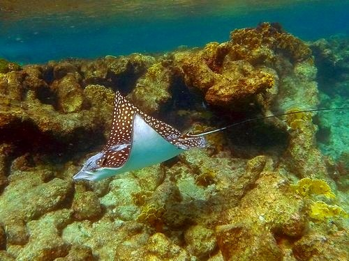 Bonaire sail and snorkel Cruise Excursion Cost
