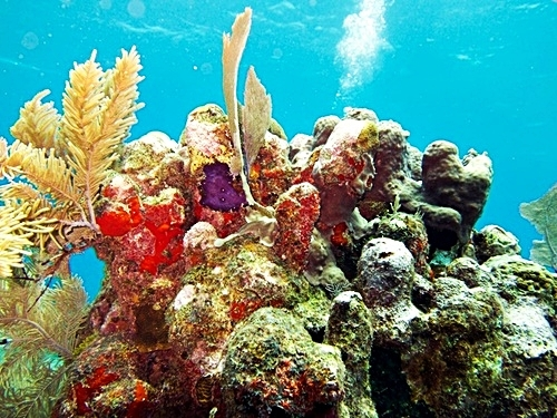 Roatan 2 tank dive Tour Reservations
