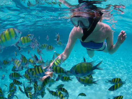 Cozumel Island SNUBA Diving and Snorkel Chankanaab Beach Tour Cost