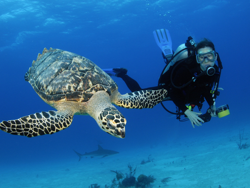 Nassau  Bahamas perfect for all divers Reservations