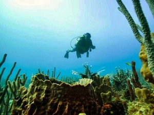 St. John's Antigua 2 Tank SCUBA Diving Excursion