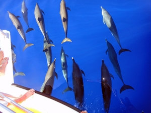 St. Lucia Dolphin and Whale Watching Excursion