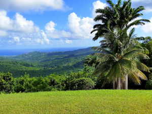 St. Lucia Highlights, Sightseeing and Shopping Excursion