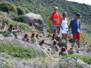 St Maarten Coastal Guana Bay Hike Excursion