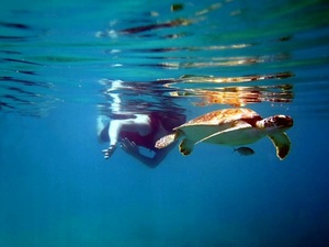 St. Thomas Honeymoon Beach, Turtle Snorkel and Beach Break Excursion by Boat