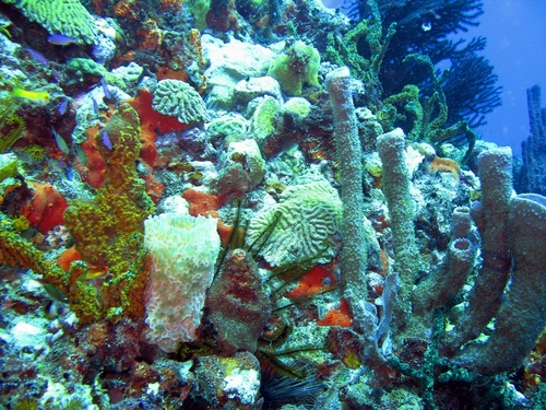 Dominica Roseau wreck dive Tour Reservations