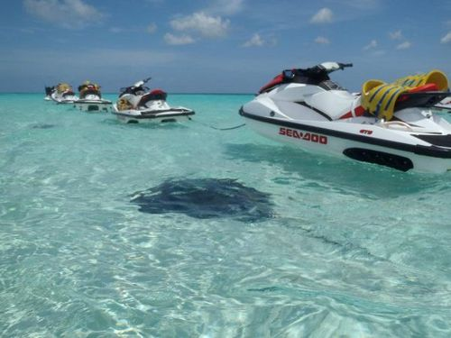 Grand Cayman  George Town Stingray City  Excursion