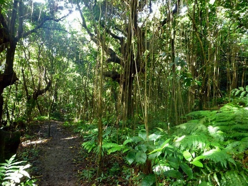 St. Kitts Hiking Tour Reservations