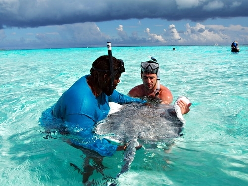 Grand Cayman swim with stingrays Cruise Excursion Reservations