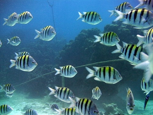 Cozumel Island marine life Excursions Booking