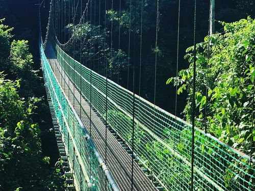 Roatan  Honduras jungle walkways Prices