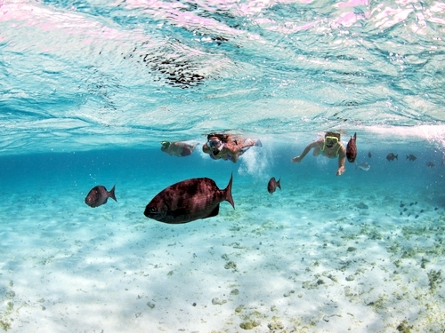 Grand Cayman snorkeling Trip Reservations