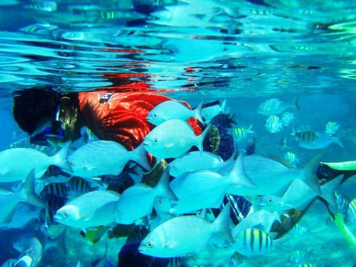 Cozumel  Mexico snorkeling Reviews