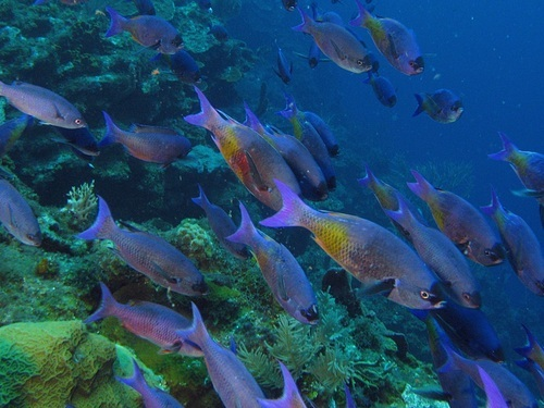 Roatan West End coral reef Shore Excursion Tickets