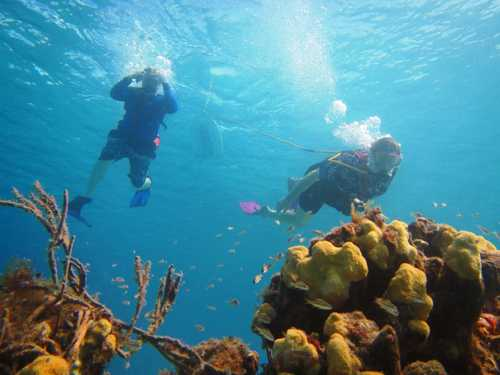 Cozumel Island SNUBA Dive and Snorkel Chankanaab Beach Shore Excursions Booking