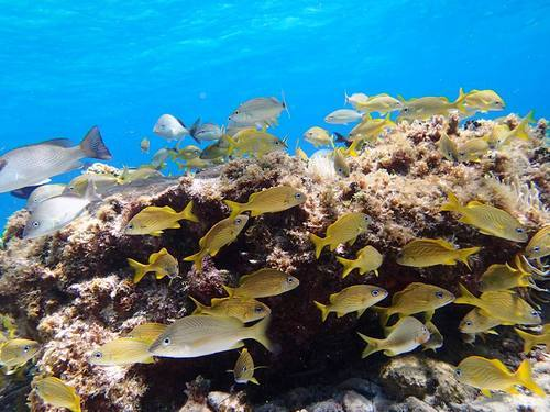 Roatan coral reef guided snorkel Excursion