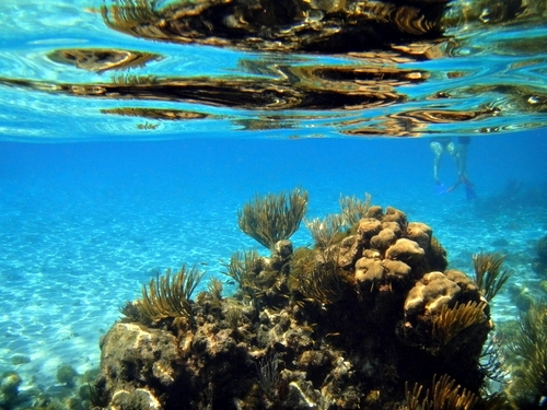Cayman Islands snorkeling Excursion Reviews