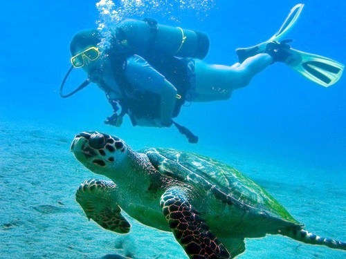 Dominica Roseau padi Tour Tickets