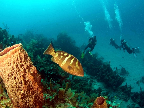 Roatan certified SCUBA diving Shore Excursion