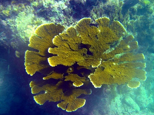 Curacao coral reef Trip Reservations
