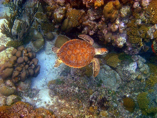 Curacao  Willemstad coral reef Trip Tickets
