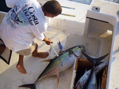 Grand Cayman  Grand Cayman (George Town) deep sea fishing Tickets