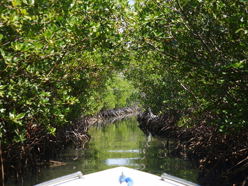 Belize Belize City mangroves Boat Excursion Tickets