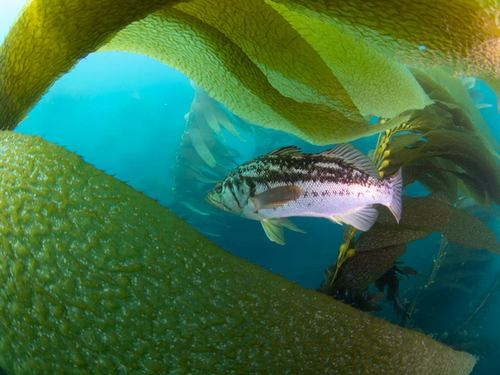 Ensenada tropical fish Tour