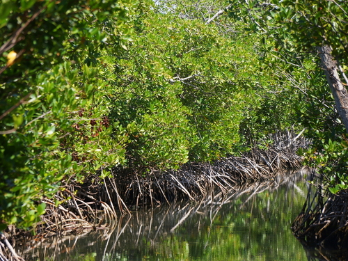 Belize eco nature  Boat Cruise Excursion Reviews