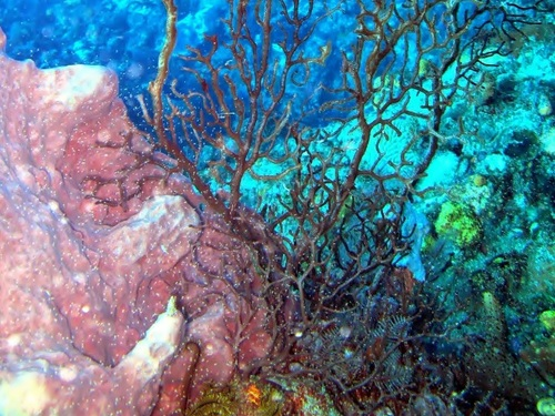 Dominica Roseau wreck dive Excursion Reservations