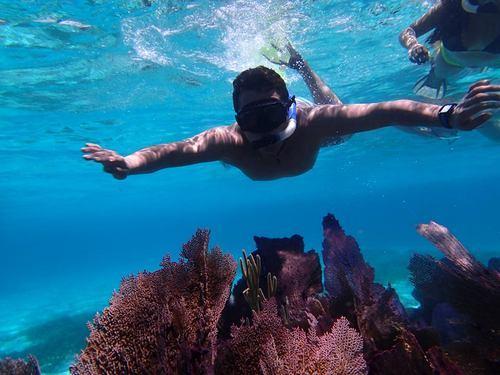 Roatan Coral Roatan Honduras Coral Reef