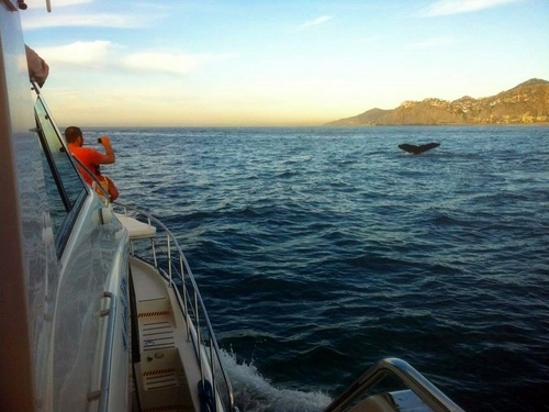 Cabo San Lucas luxury yacht  Shore Excursion Cost