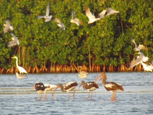 Cartagena  Colombia mangroves Tickets