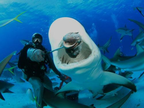 Nassau  Bahamas get up close to sharks Cruise Excursion
