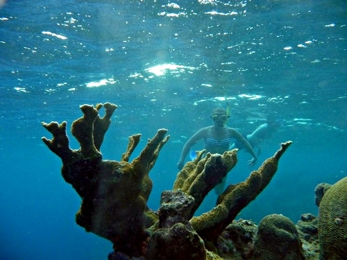 Curacao Willemstad guided snorkeling Cruise Excursion Reservations
