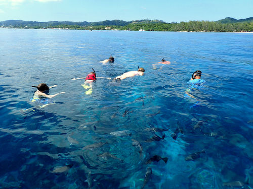 Roatan  Honduras Fun Snorkel Tour Tickets
